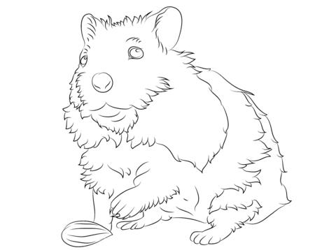 hamster para pintar los niños